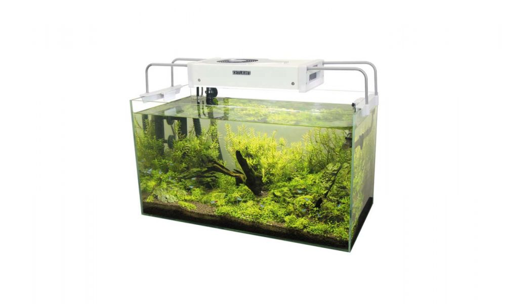 Best Turtle Tank Heaters